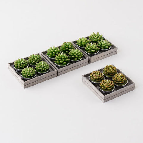 Succulent Tea Light Set