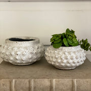 White Textured Pot