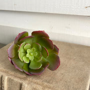 Red Tipped Succulent Mini