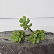 Ice Plant Succulent- Green