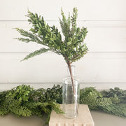Boxwood and Pine Stem
