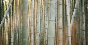 How Bamboo Prevents Deforestation