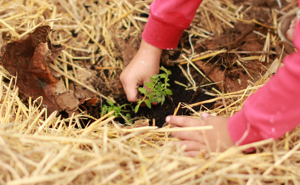 Earth Day: Best Ways to Celebrate