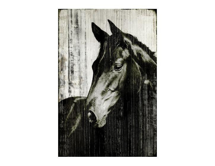 Steady Horse Artwork- 40x60