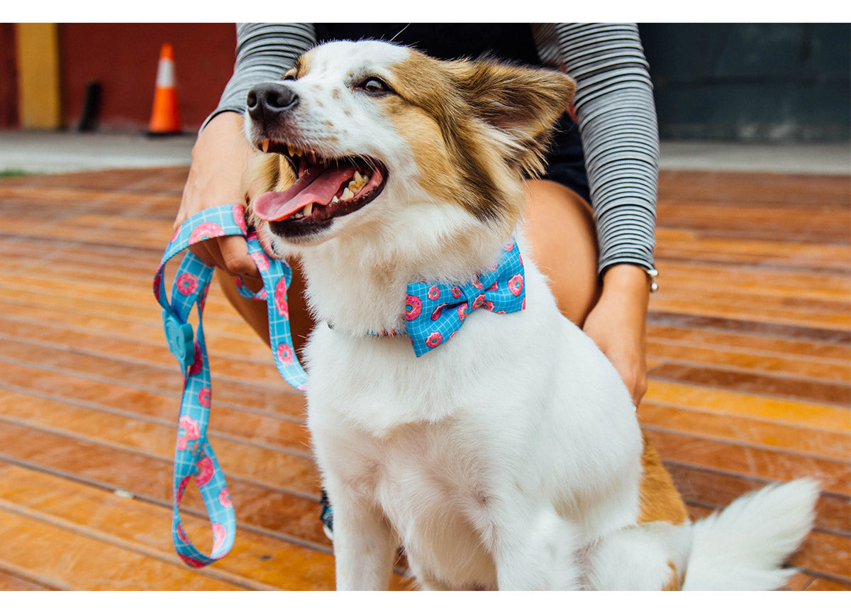 Dog wearing Homer Bow Tie and Leash