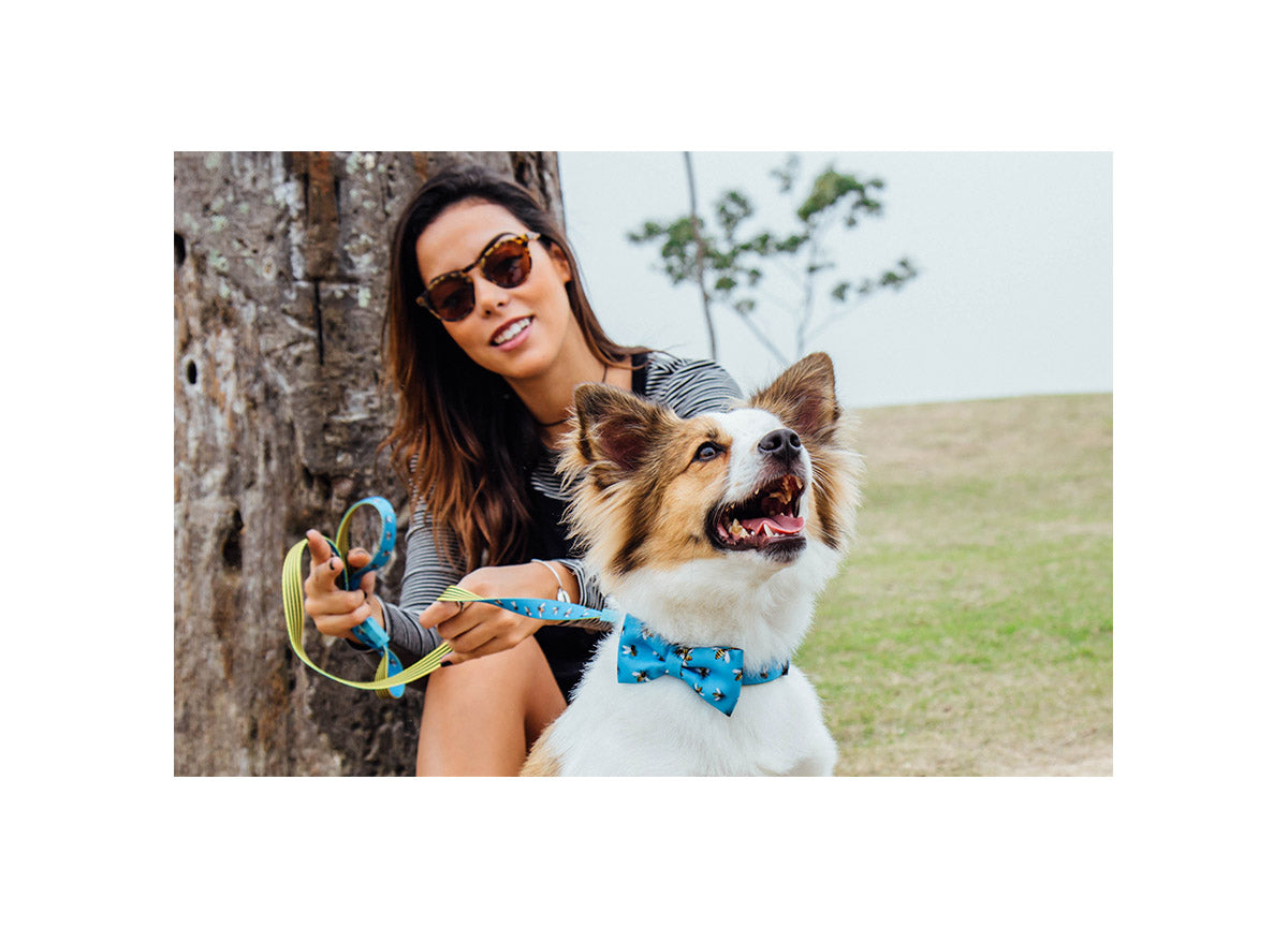Dog wearing Buzz bow tie and leash