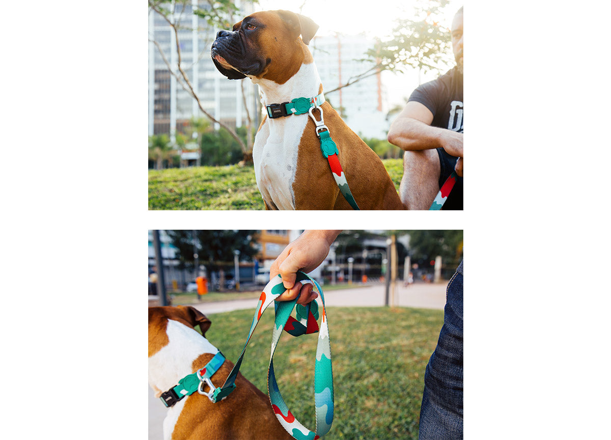 Boxer wearing Camo Collar and Leash