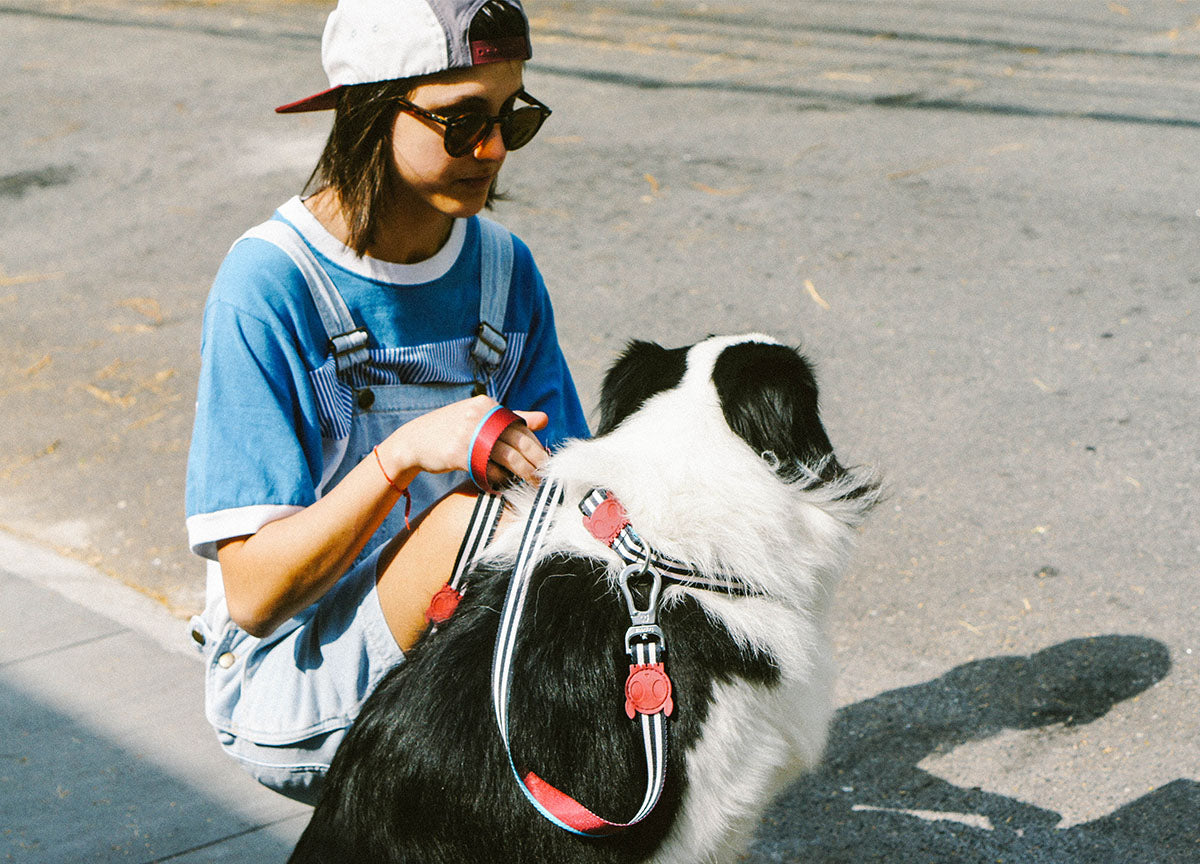 Border Collie wearing Asos Leash