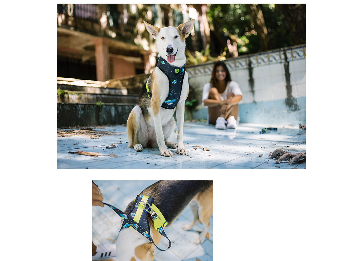 Mutt dog wearing Area 51 Harness and Leash