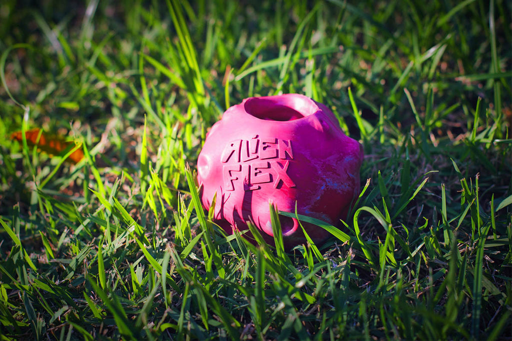 Alien Flex Mini Meteor Dog Toy | Alien Flex