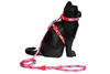 Oh La La | Cat Harness with Leash