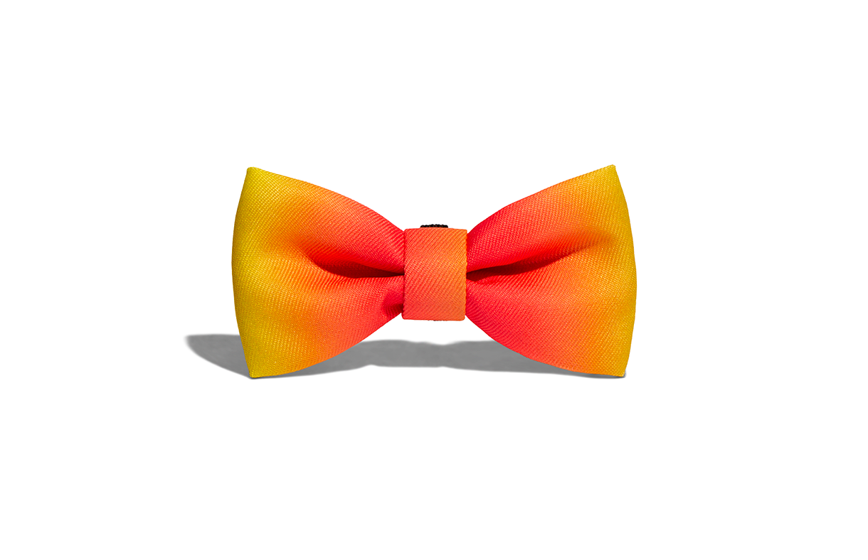 Citrus | Dog Bow Tie