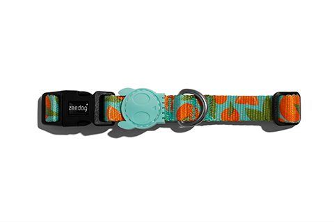 dog-collar-florida-orange-blue-zeedog-pet-active