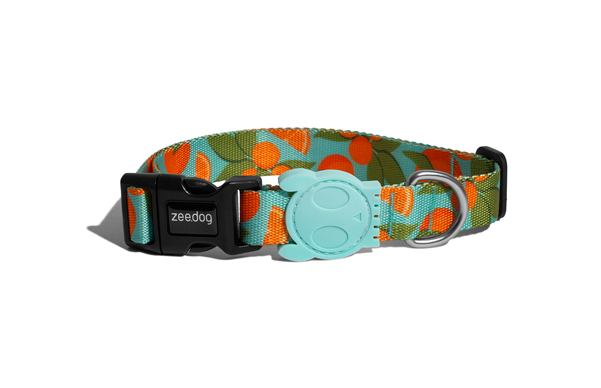 Florida | Dog Collar