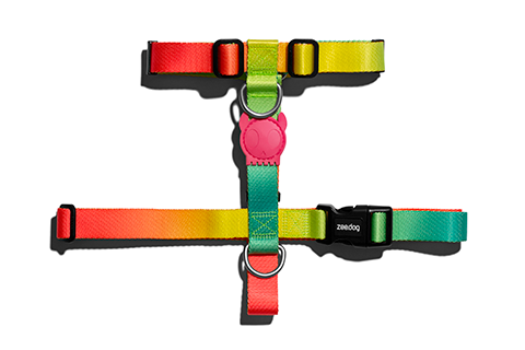 Citrus | Dog H Harness