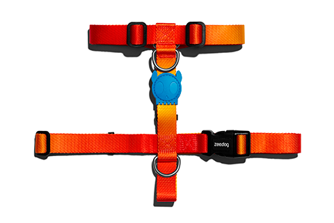 Solaris | H Harness