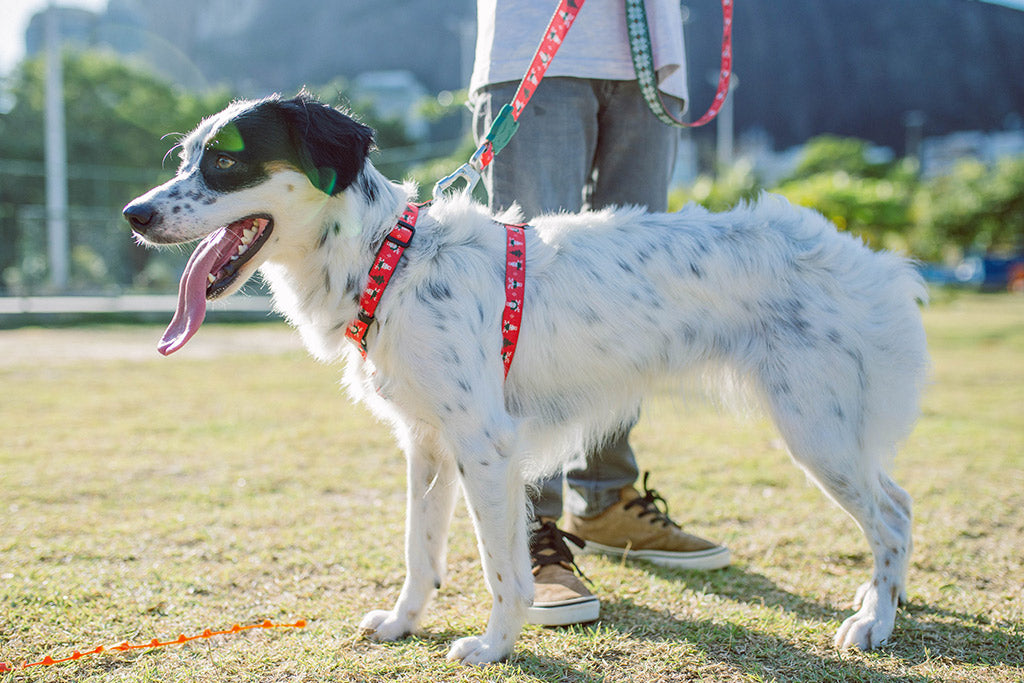 Mutt wearing Rudolph Dog H Harness | Zee.Dog Christmas Limited Edition
