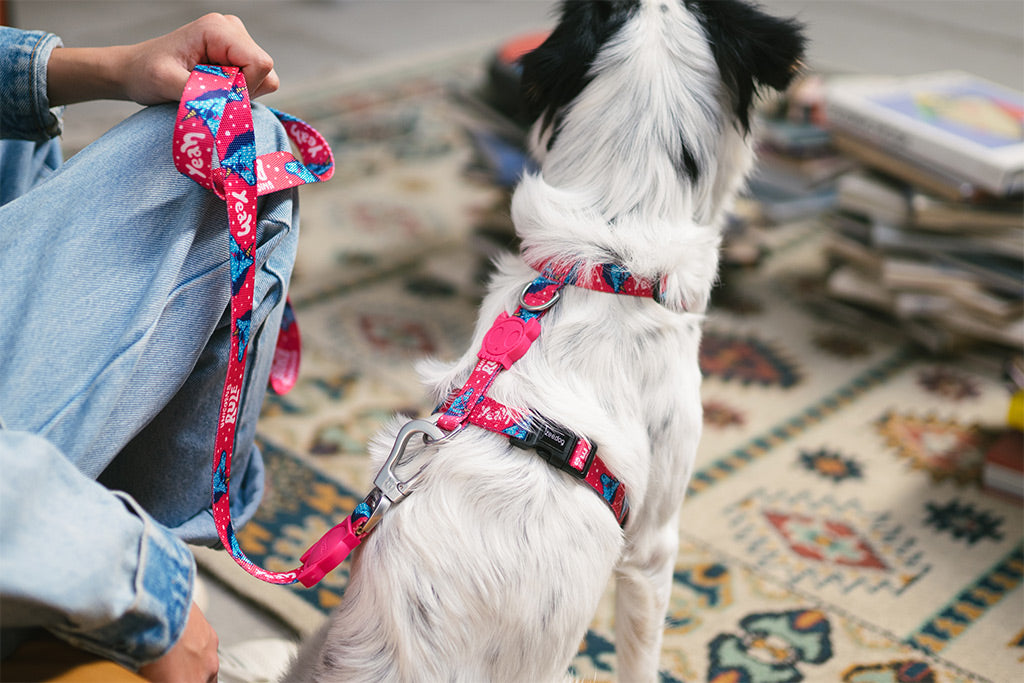 Uni | Dog H Harness