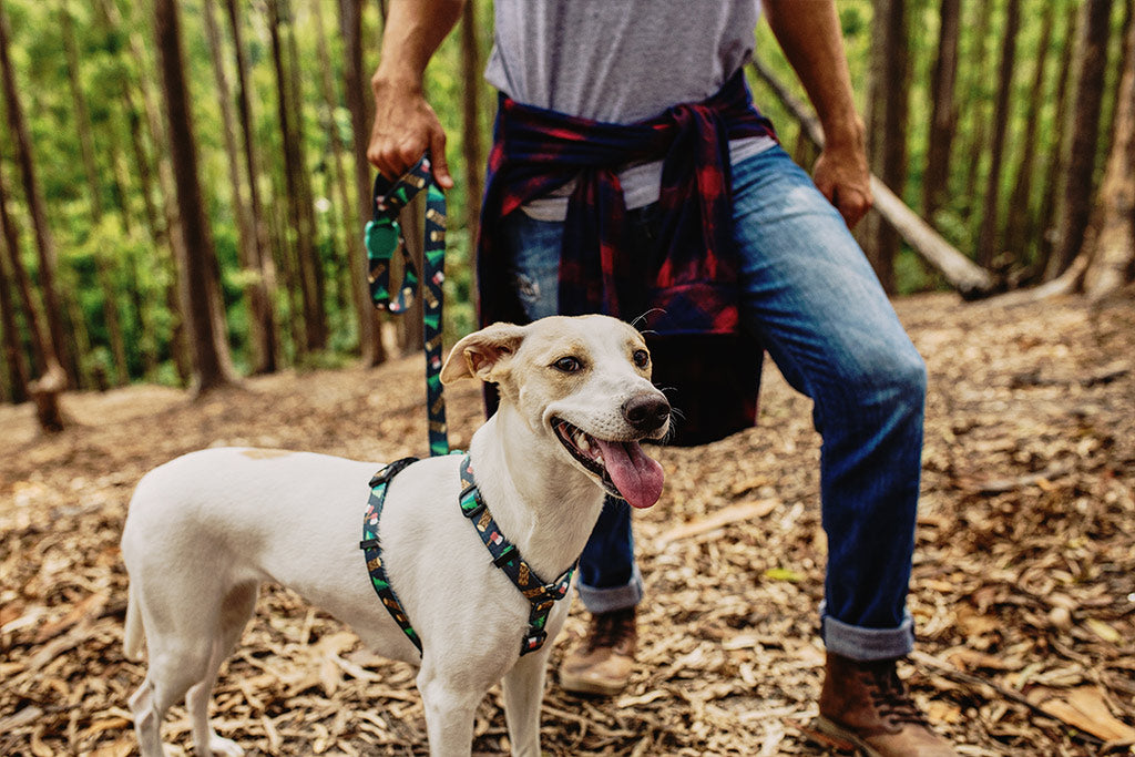 Dog Wearing Woods H Harness | Zee.Dog
