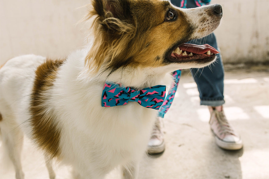 Dog Wearing Crosby Bow Tie | Zee.Dog