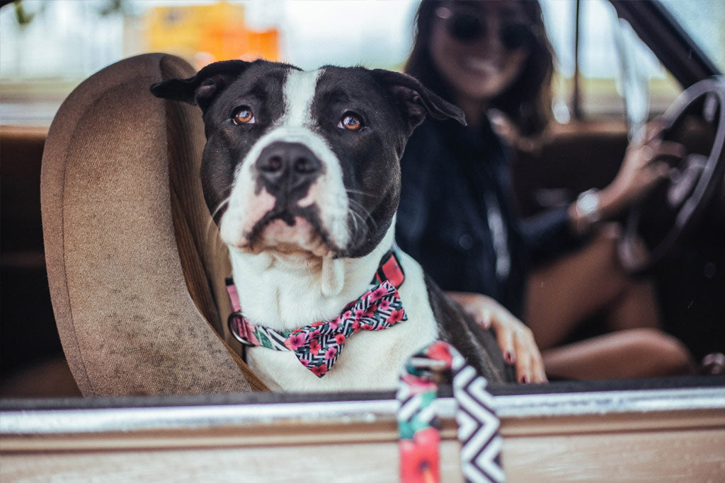 Mutt wearing Mahalo Bow Tie | Zee.Dog