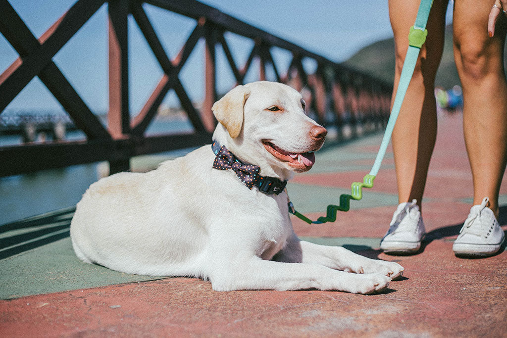 Dog wearing Triangles Bow Tie | Zee.Dog