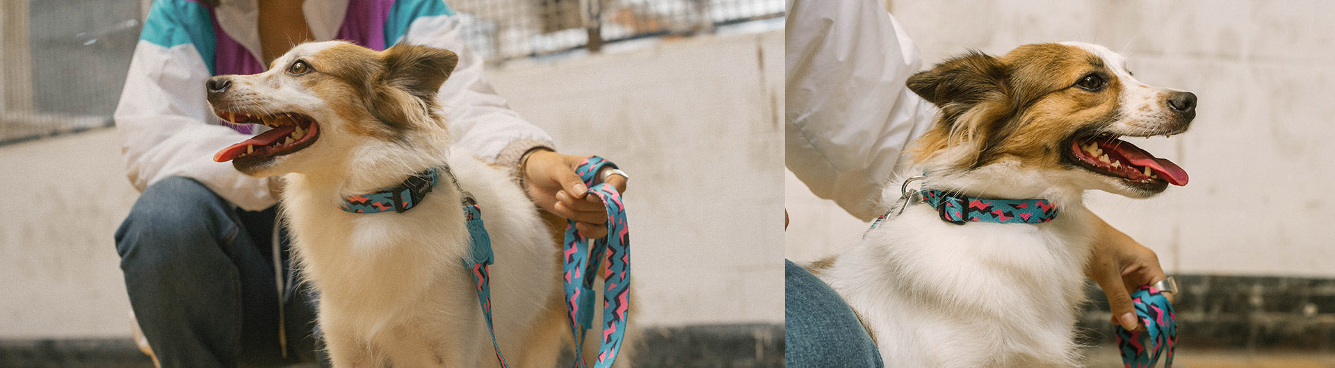 Dog Wearing Crosby Collar | Zee.Dog