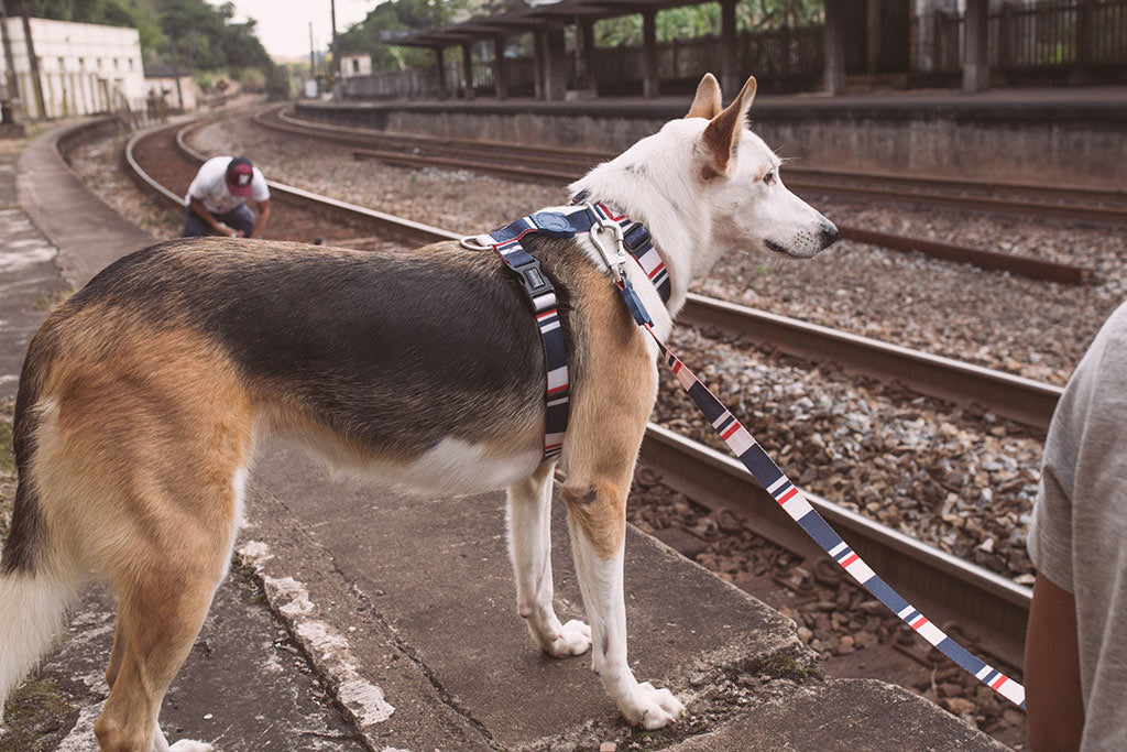 Rocket | Dog H Harness