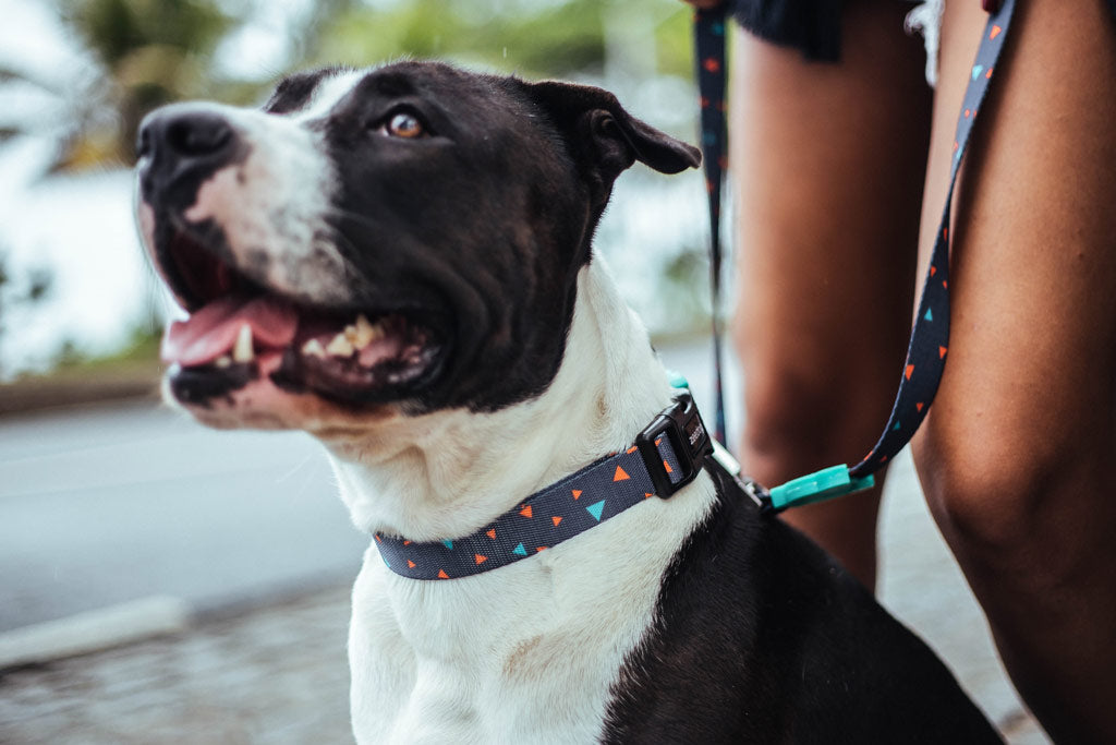 Dog wearing Triangles Dog Collar | Zee.Dog