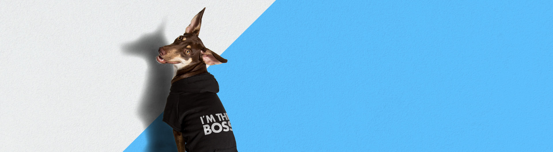 I'm The Boss | Dog Sweater