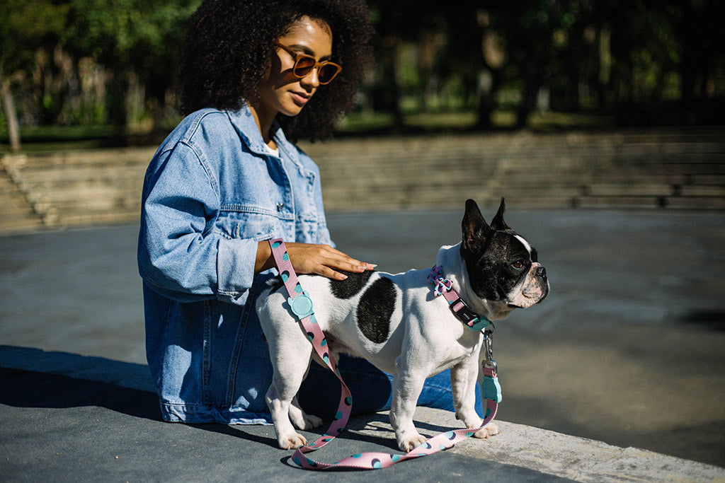 Dog wearing Polka Dog Leash | Zee.Dog