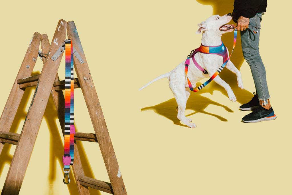 Prisma | Dog Leash