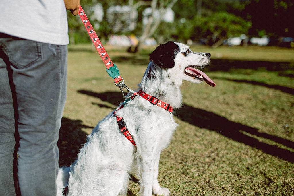 Mutt wearing Rudolph Dog Leash | Zee.Dog Christmas Limited Edition