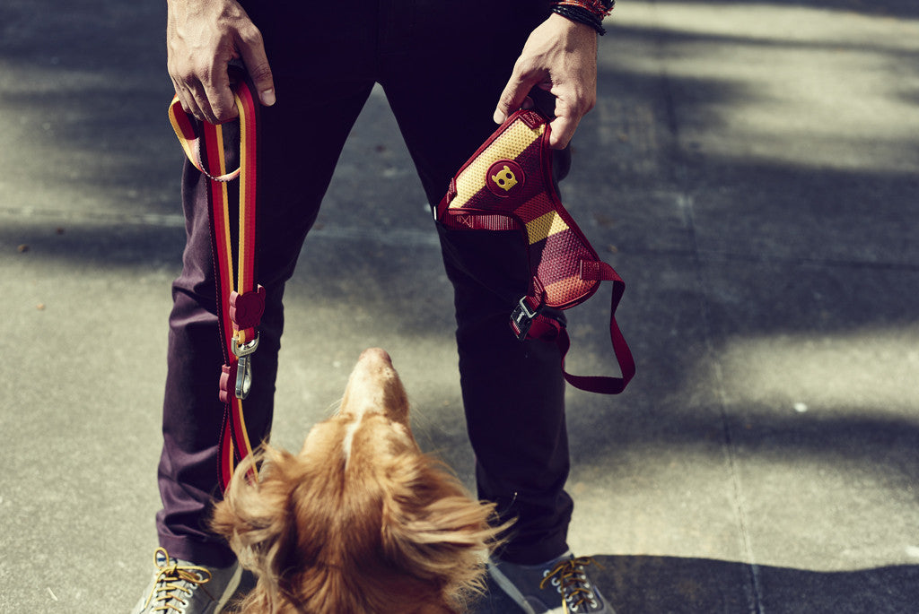Dog looking at man holding a Venice air mesh harness and leash | Zee.Dog
