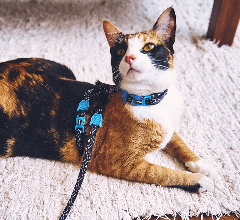Mahleb | Cat Harness with Leash