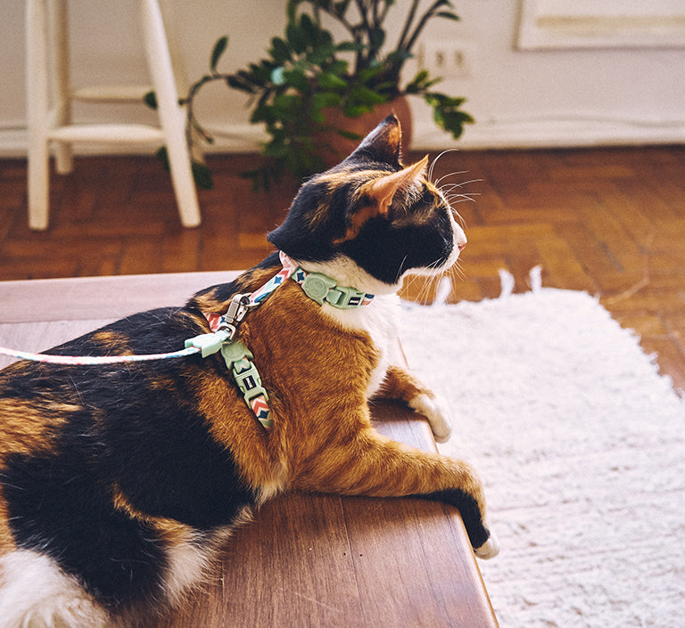 Marcuch | Cat Harness with Leash
