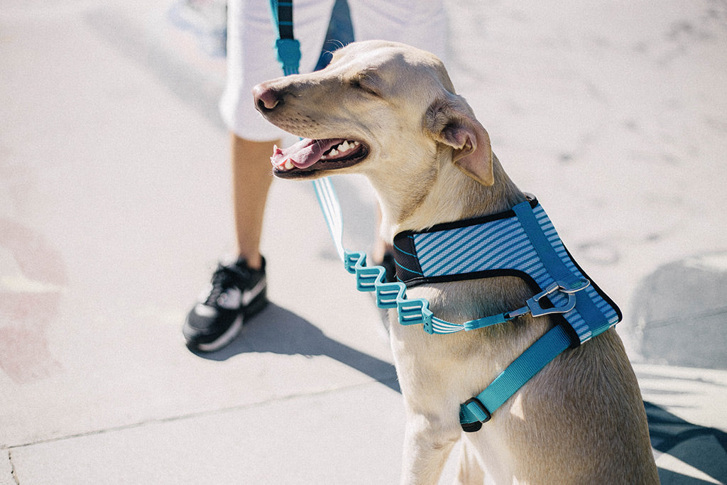 Helsinki | Mesh Plus Dog Harness