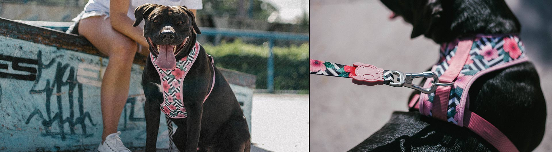 Mahalo | Mesh Plus Dog Harness