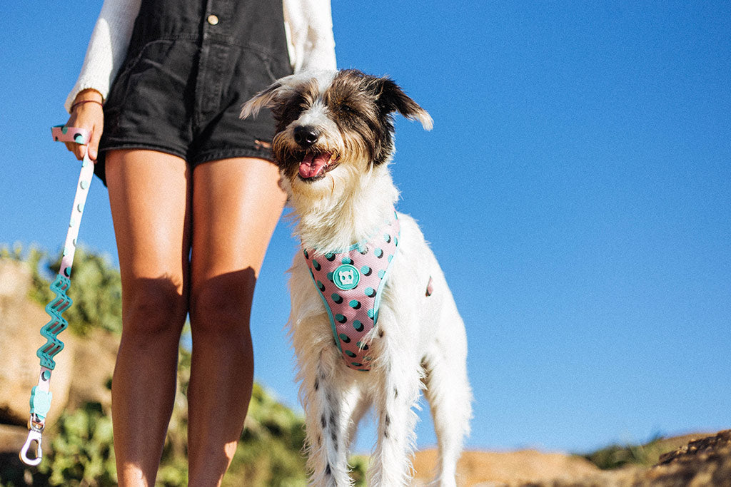 Dog wearing Polka Mesh Plus Dog Harness | Zee.Dog