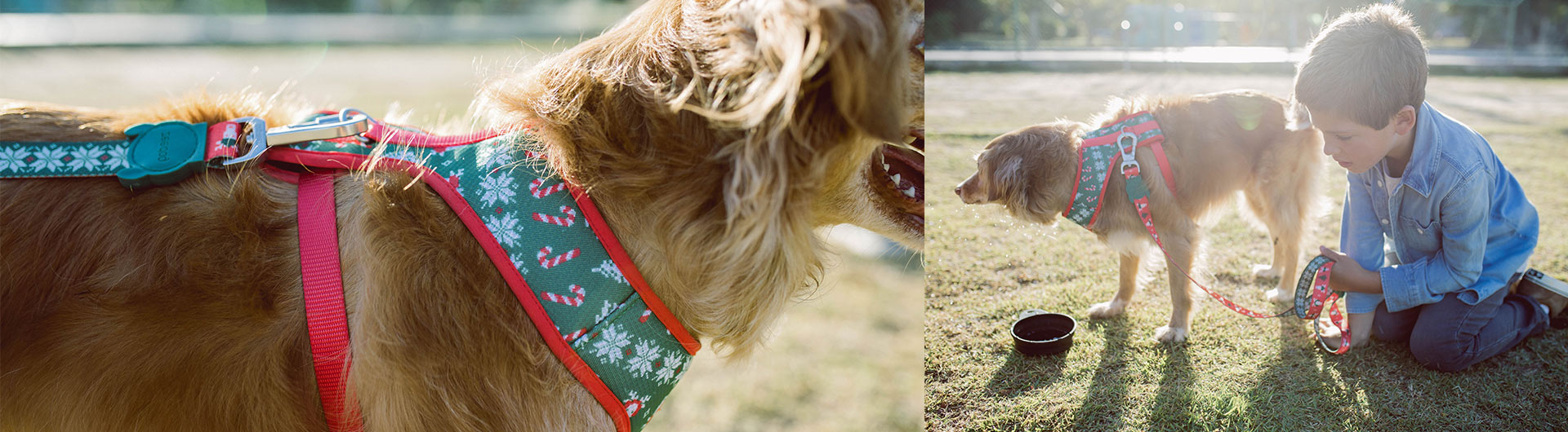 Mutt wearing Rudolph Dog Mesh Plus Harness | Christmas Limited Edition