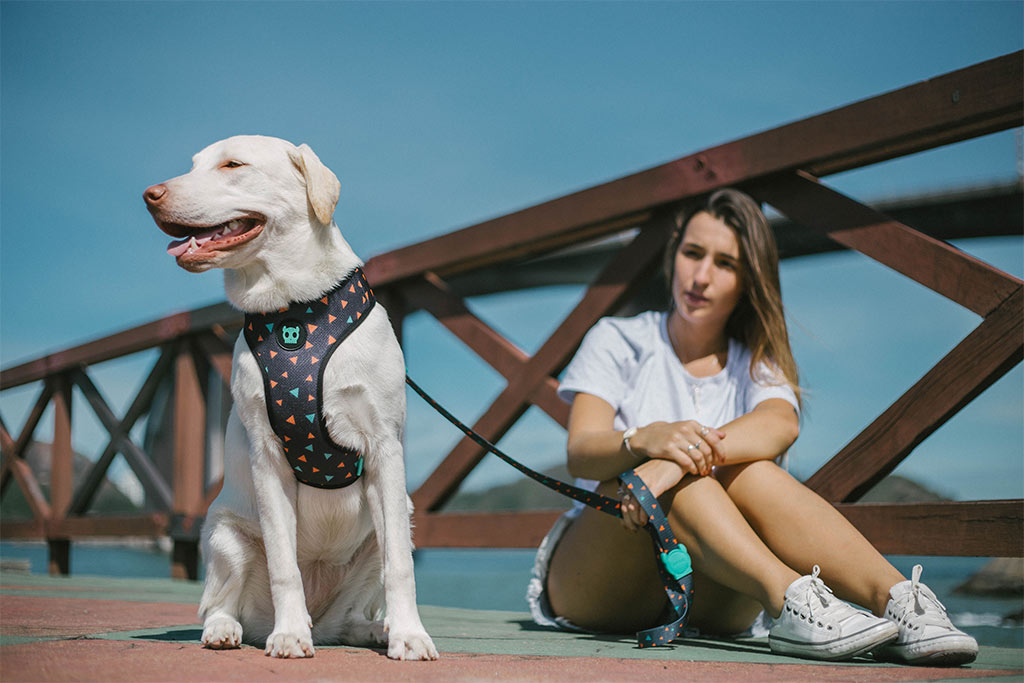 Dog wearing Triangles Mesh Plus Dog Harness | Zee.Dog