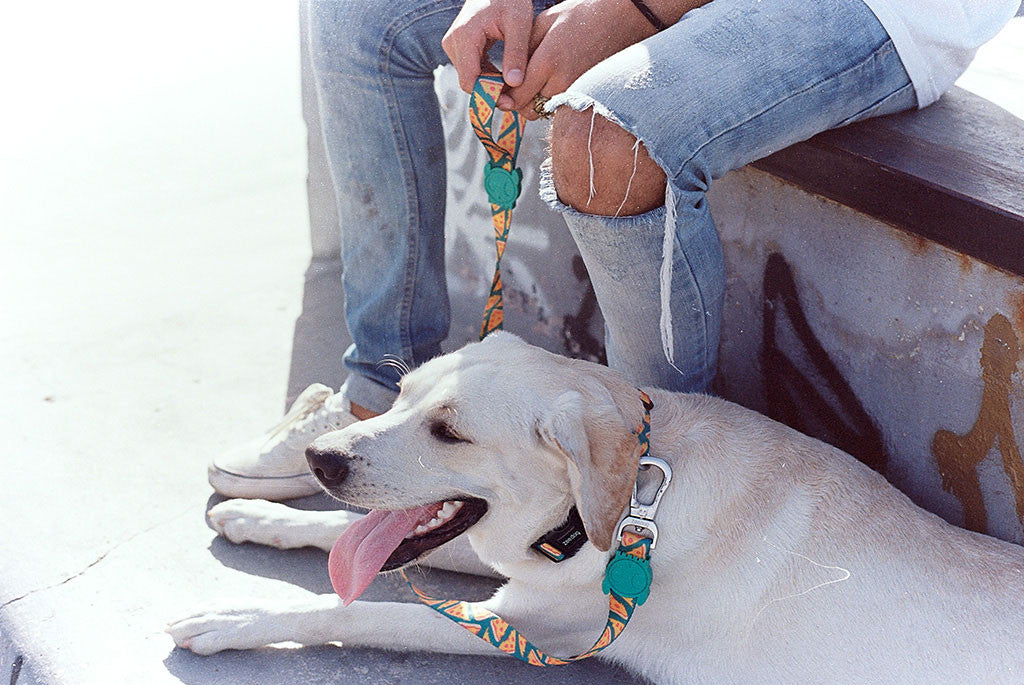 Man holding NYC Pizza dog leash next to a dog | Zee.Dog