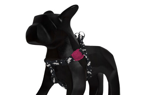 step-in-dog-harness_flash_bolt_zeedog_pet_active