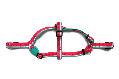 step-in-dog-harness_lola_watermelon_zeedog_pet_active