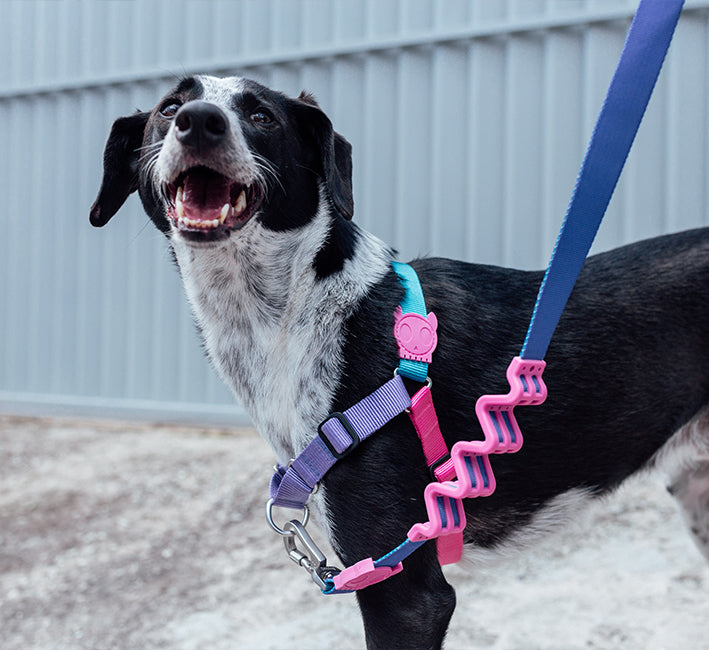 Aurora | Soft-Walk Harness