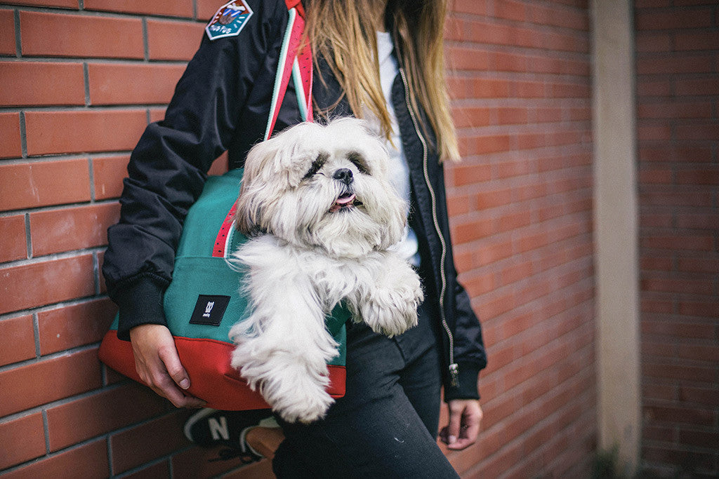Shih Tzu being carried in Lola Dog Carrier | Zee.Dog