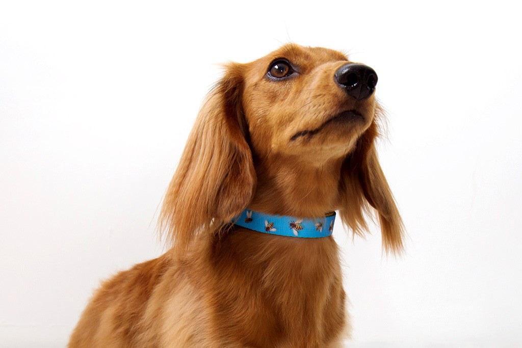Buzz Dog Collar | Zee.Dog