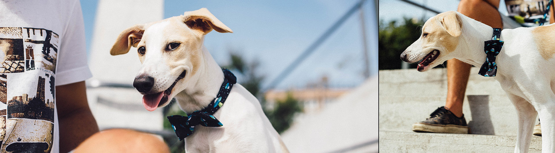 Area 51 | Dog Collar