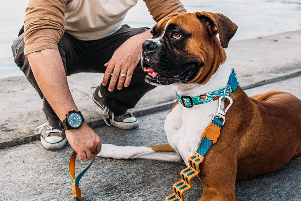 McZee | Dog Collar