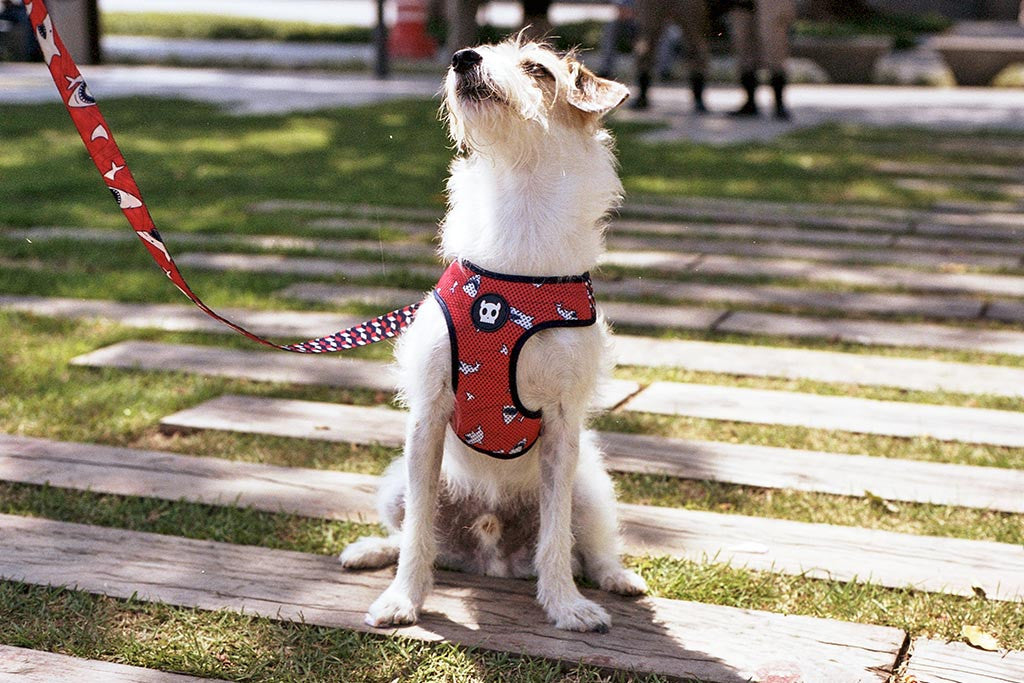 Dog wearing Chewy mesh harness | Zee.Dog